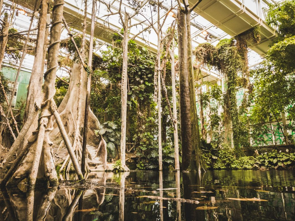 Rainforest in CosmoCaixa