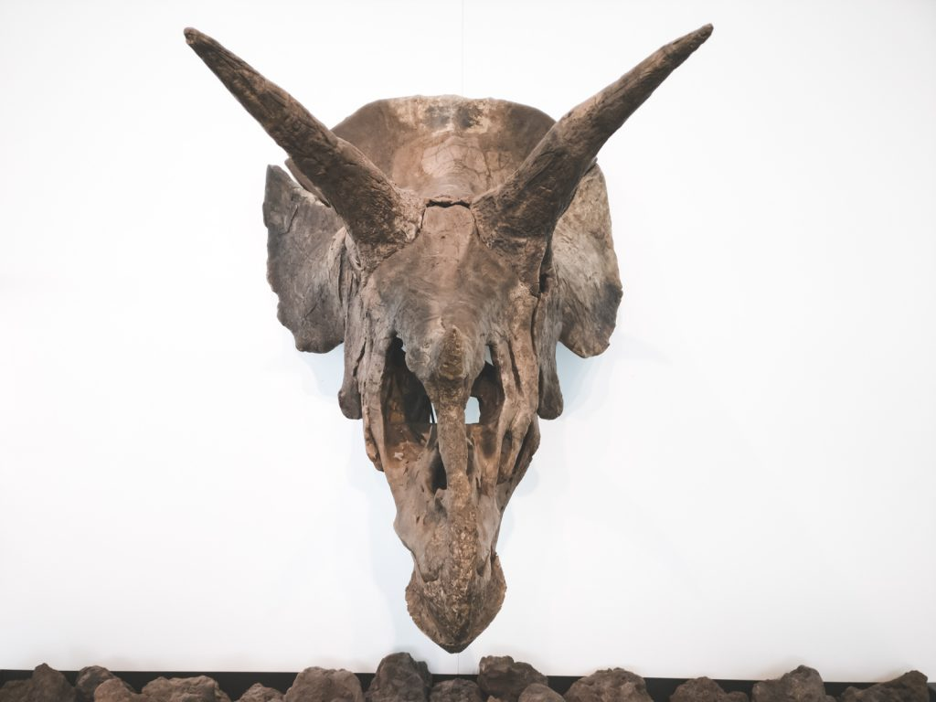 Head Skeleton